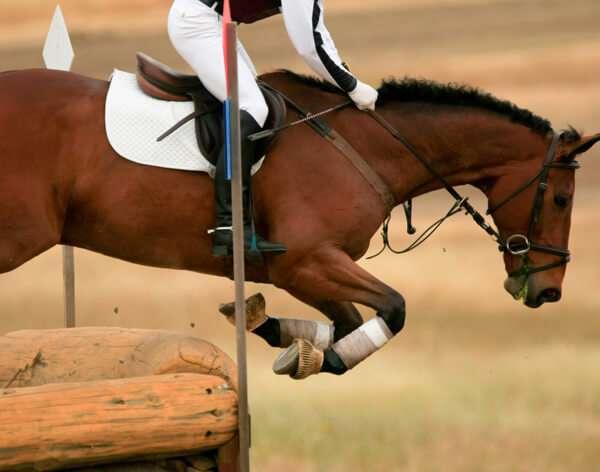 I principali criteri per scommettere sui cavalli: guida ippica