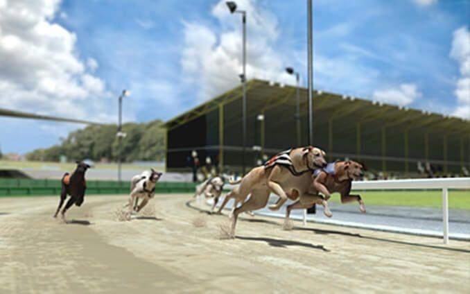 corse cani snai